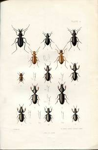 The Coleoptera of the British Islands, a descriptive account of the families, genera, and species indigenous to Great Britain and Ireland, Part I