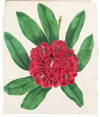 View Image 2 of 8 for Paxton's Magazine of Botany, and Register of Flowering Plants Inventory #37449