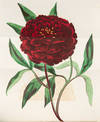 View Image 4 of 8 for Paxton's Magazine of Botany, and Register of Flowering Plants Inventory #37449