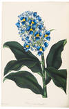 View Image 5 of 8 for Paxton's Magazine of Botany, and Register of Flowering Plants Inventory #37449
