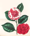 View Image 6 of 8 for Paxton's Magazine of Botany, and Register of Flowering Plants Inventory #37449