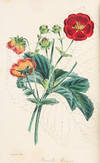 View Image 7 of 8 for Paxton's Magazine of Botany, and Register of Flowering Plants Inventory #37449