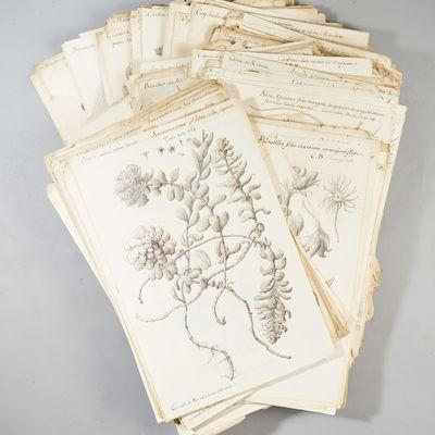 [Important set of 402 botanical...