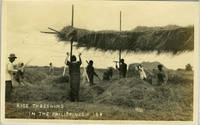 Rice Threshing in the Philippines.  (numbered 184)