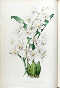 Pescatorea. Iconographie des Orchidées