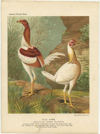 Pile Game. Bred by Mr. Joseph Colgrove. Cockerel, First Prize at Crystal Palace and Birmingham, 1886. Hen (Mother of the Cockerel) First Prize at the Dairy Show, 1885