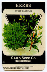 Herbs. Sweet Marjoram
