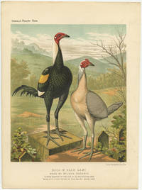 """Duck-Winged Game. Bred by Mr. John Goodwin. """"Simon,"""" Winner of the Cup at Birmingham, 1885. """"Miss Etty,"""" First Prize at the Dairy Show, 1885"""