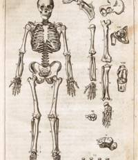 THE ANATOMY OF THE BODY OF MAN: WHEREIN IS EXACTLY DESCRIBED EVERY PART THEREOF, IN THE SAME MANNER AS IT IS COMMONLY SHEWED IN PUBLICK ANATOMIES...