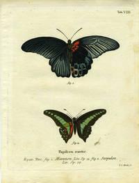 Papilion. Exotic