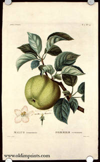 Malus communis. Pommier commun by  P.  (illus).  Jarry (engraved by) APPLE) Bessa - Ca. 1801- 1819. - from oldimprints.com and Biblio.com