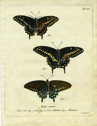 Papil. Exotic by  I.C [ButterflyMoth Engraving]  Bock - 1780 - from Antipodean Books, Maps & Prints and Biblio.com