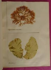 FINE VICTORIAL COLLECTION OF MOUNTED  SEAWEED SPECIMENS.