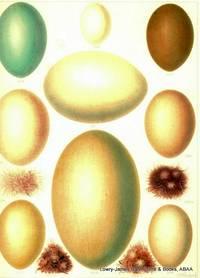 British Bird Eggs: Heron, Bittern, Swan, Goose, Duck with down.
