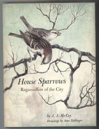 HOUSE SPARROWS  Ragamuffins of the City.