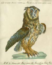 "Gufo di penna diversa o mutata,  Plate LXXXIII, engraving from ""Storia naturale degli uccelli trattata con metodo e adornata di figure intagliate in rame e miniate al naturale"""
