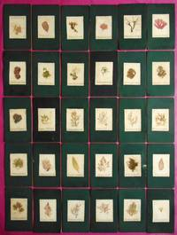 A FINE VICTORIAN COLLECTION OF 39 SEAWEED SPECIMENS  MOUNTED ONTO DISPLAY CARDS