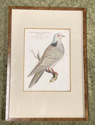 , . Fine. Frisch (Artist), Johann L.. Bird Engraving. Hand-colored Turtle Dove. Turtur. Streptopelia...
