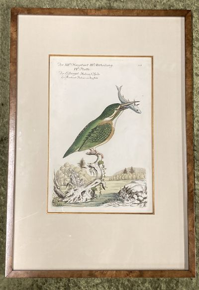 , . Fine. Frisch (Artist), Johann L.. Bird Engraving. Hand-colored Kingfisher. Halcion Ispida. : , ....