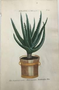 Aloe Socoterina vera. Aloe succotrin.; N. 44
