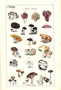 Populäre Botanik oder gemeinfassliche Anleitung zum Studium der Pflanze und der Pflanzenreiches. Zuchleich ein Handbuch zum Bestimmen der Pflanzen auf Excursionen