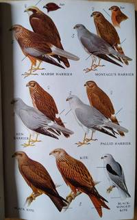 image of A Field Guide to the Birds of Britain and Europe