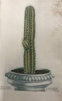 Cereus erectus glaucus spinis; N.357