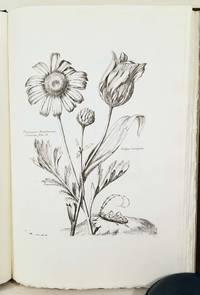 Variae ac Multiformes Florum Species appressae ad Vivum...  Diverses Fleurs dessinees et Gravees d'Apres le Naturel par Nicholas Robert.