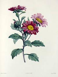 Botanique ... ornée de soixante-cinq planches, imprimées en couleurs d'après les peintures de P. J. Redouté