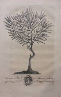 Wild Olive Tree - plate 12 from A Natural History of Barbados