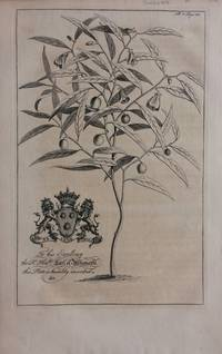 French Willow - plate 8 from A Natural History of Barbados
