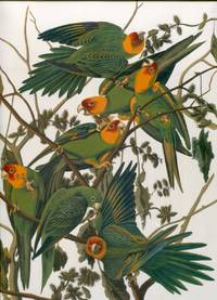 Audubon\'s Birds of America