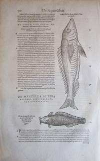"""14 printed leaves from Gessner's """"Historia animalium: Opus Philosophis, Medicis, Grammaticis, Philologis ..."""""""