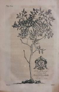 The Forbidden Fruit Tree (Grapefruit Tree) - plate 7 from A Natural History of Barbados