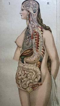 image of Het Vrouwelijk Lichaam; [The Female Body]