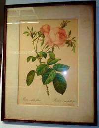 PRINTS OF ROSES