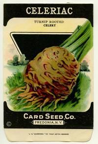 Celeriac. (Turnip rooted celery)