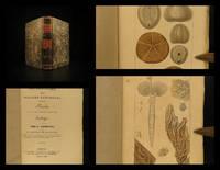 Dictionnaire des sciences naturelles. Planches…zoologie… vers et zoophytes