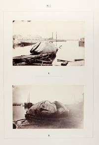 Monographie Illustrée du Baleinoptère trouvé le 29 Octobre 1865 sur la Côte Occidentale de Suède
