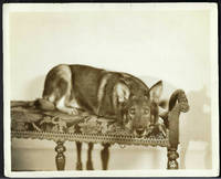 LAND OF THE SILVER FOX (Original Vintage Photo from the 1928 RIN TIN TIN Warner Brothers Film)