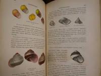 Manuel De Conchyliologie Et De Paléontologie Conchyliologique