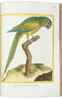 [Collection of 66 plates from Histoire naturelle des oiseaux]