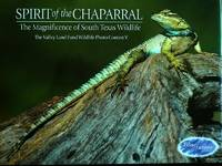 Spirit of the Chaparral: The Magnificence of South Texas Wildlife. by  [Editor] Eyrn Reddell Wingert - First Ed; First Printing, so stated.  - 2003. - from Black Cat Hill Books and Biblio.com