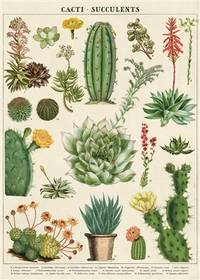 "Cavallini & Co. Cacti & Succulents Decorative Paper Sheet 20"" x 28"" (Spanish..."