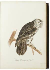 Ornithology and Oölogy of New England