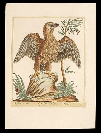 [Rome: Bouchard & Gravier, 1775. Etching with engraving, coloured by hand. Very good condition. A be...