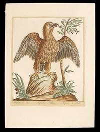 Aiglon de Nid [Nesting Eagle]
