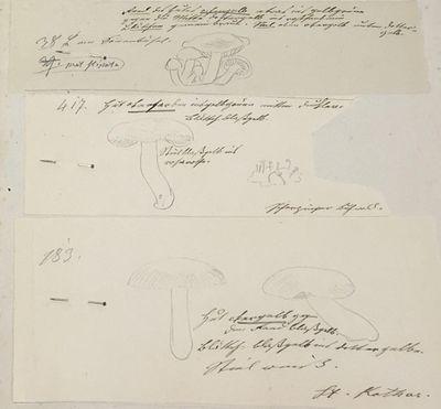 Manuscript Field Notes in German Over...