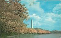 Washington DC - Washington Monument at Cherry Blossom time – 1966 used Postcard