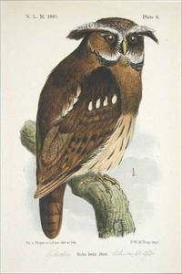 Original Color Lithograph Of The Liberian Maned Owl (Bubo Letti Butt.), by Theodoor Van Hoytema